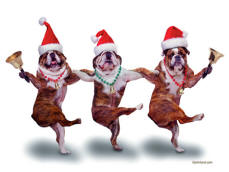 picture of bull dogs dancing with santas hats on